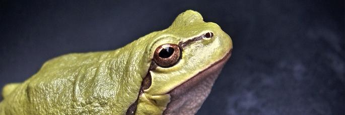 01 frog header
